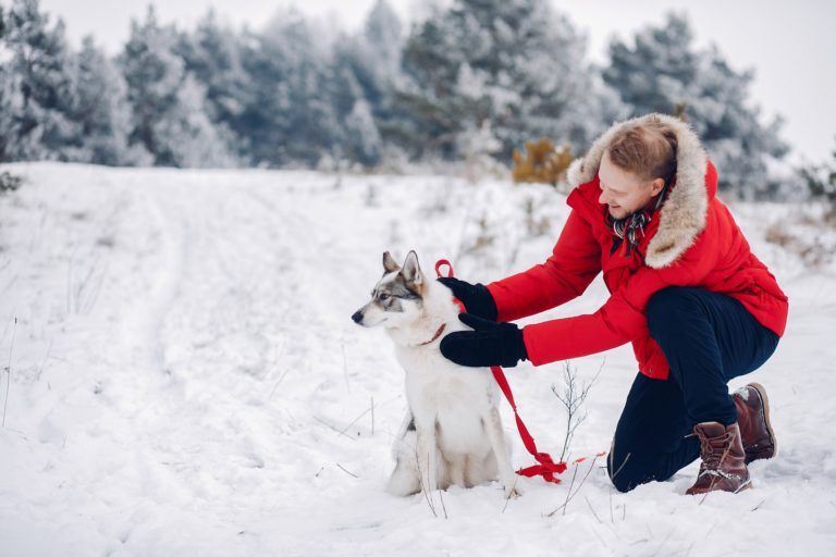 Beautiful woman playing with a dog